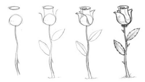 как просто нарисовать розу