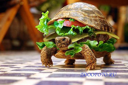 Субботний рецепт.  Правильный бутерброд